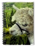 An Alpaca In Vail Spiral Notebook