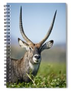 An Antelope Standing Amongst Tall Spiral Notebook