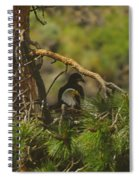 An Eagle And Young Spiral Notebook