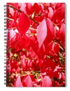 An Ohhh Fall Color Spiral Notebook