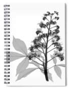 An X-ray Of A Chestnut Tree Flower Spiral Notebook