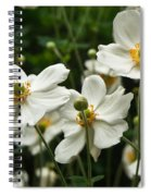 Anemonae Cluster 8 Spiral Notebook