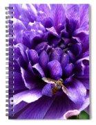 Anemone Coronaria Named Lord Lieutenant Spiral Notebook