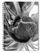 Anemone De Caen Or Poppy Anemone Spiral Notebook