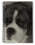 Angelic Boxer Spiral Notebook