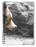 Angry Grizz Spiral Notebook