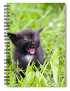 Angry Kitten Spiral Notebook