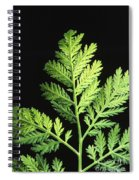 Annual Wormwood Spiral Notebook