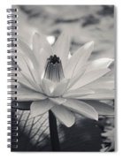 Ansel's Lily Spiral Notebook