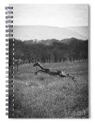 Antelope Jumping In Full Stride Spiral Notebook