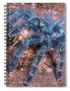 Antilles Pinktoe Tarantula Spiral Notebook
