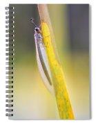 Antlion Spiral Notebook