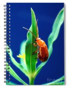Aphthona Flava Flea Beetle On Leafy Spiral Notebook