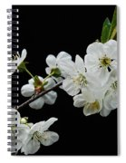 Apple Blossom 1015 Spiral Notebook