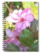 Apple Blossom II Ab2wc Spiral Notebook