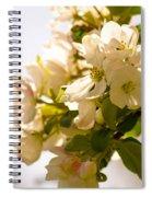 Apple Blossoms 9 Spiral Notebook