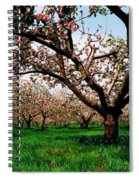 Apple Orchard, Co Armagh, Ireland Spiral Notebook