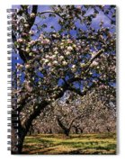 Apple Trees In An Orchard, County Spiral Notebook