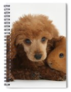 Apricot Miniature Poodle Pup With Red Spiral Notebook