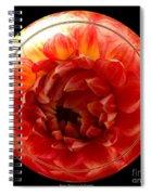Apricot Orange Dahlia Under Glass Spiral Notebook