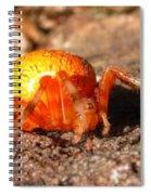 Araneus Marmoeus Spiral Notebook