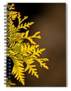Arbovitae Fan 1 Spiral Notebook