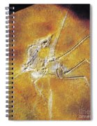 Archaeopteryx Lithographica Spiral Notebook