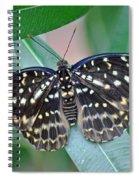 Archduke Butterfly Spiral Notebook