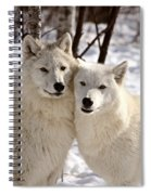 Arctic Wolves Close Together In Winter Spiral Notebook