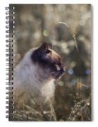 Are You Dreaming About Me - Siamese Feral Cat Spiral Notebook