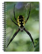 Argiope Spiral Notebook