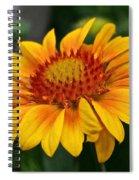 Arizona Apricot Spiral Notebook