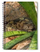 Arizona Rattler Spiral Notebook