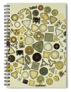 Arrangement Of Diatoms Spiral Notebook