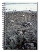 Arribada Of Olive Ridley Turtles, Costa Spiral Notebook