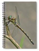 Arrowhead Spiketail Dragonfly - Cordulegaster Obliqua Spiral Notebook