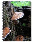Artist Conk Mushroom  Spiral Notebook