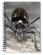 Asian Long-horned Beetle Spiral Notebook