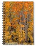 Aspen Forest In Fall - Wasatch Mountains - Utah Spiral Notebook