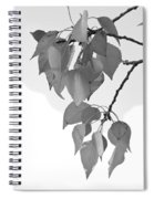 Aspen Leaves In Black And White Spiral Notebook