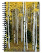 Aspen Trunks Spiral Notebook