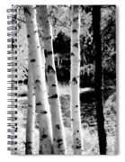Aspens L Spiral Notebook