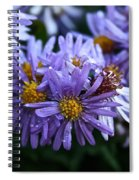 Aster Dew Drops Spiral Notebook