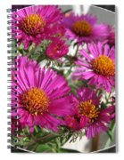 Aster Named September Ruby Spiral Notebook