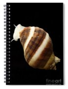 Atlantic Dogwhelk Spiral Notebook