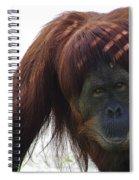 Auburn  Bangs Spiral Notebook