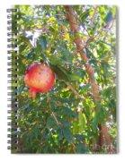 Aunt Tissy's Pomegranate Tree  Spiral Notebook