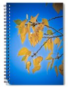 Autumn Aspen Leaves And Blue Sky Spiral Notebook