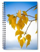 Autumn Aspen Leaves Spiral Notebook