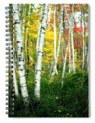 Autumn Birch Grove Spiral Notebook